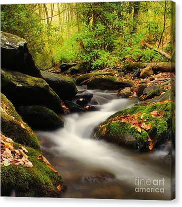 Woodland Fantasies Canvas Print by Darren Fisher