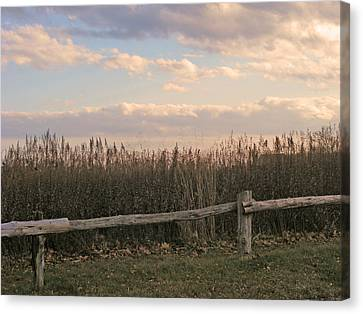 Woodland Fences - Marshes Of Fairfield County Ct Canvas Print