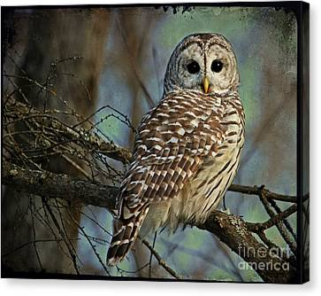 Woodland Goddess Canvas Print by Heather King