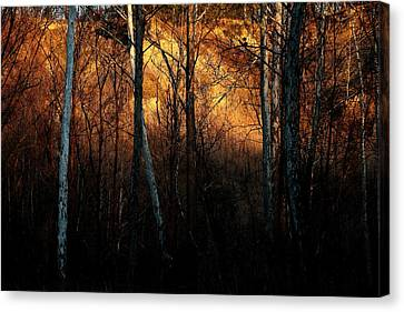 Woodland Illuminated Canvas Print by Bruce Patrick Smith