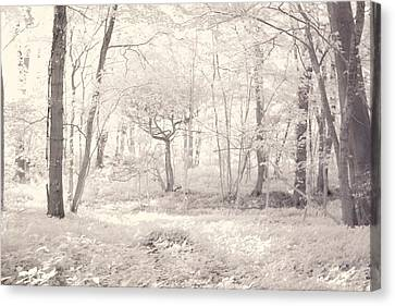 Woodland Canvas Print by Keith Elliott