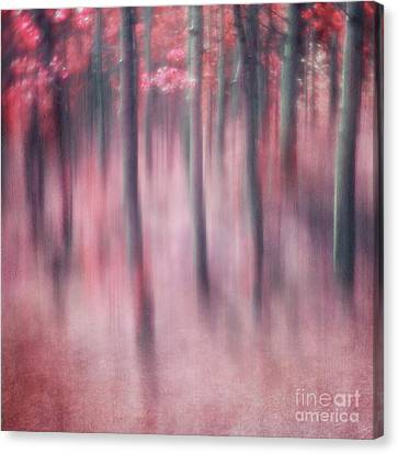 Woodland Sanctuary Canvas Print