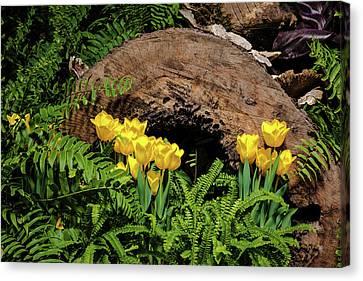 Woodland Tulip Garden Canvas Print