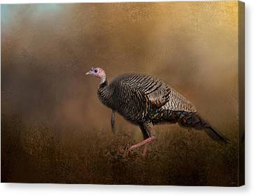 Woodland Walk - Wild Turkey Art Canvas Print by Jai Johnson