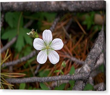 Woodland Wildflower Canvas Print
