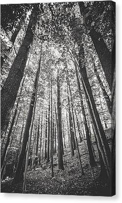 Canvas Print featuring the photograph Woodlands by Robert Clifford