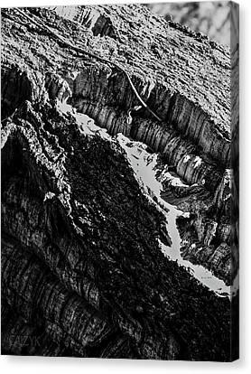 Woodoh1 Canvas Print