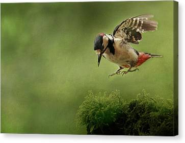 Woodpecker 19 Canvas Print