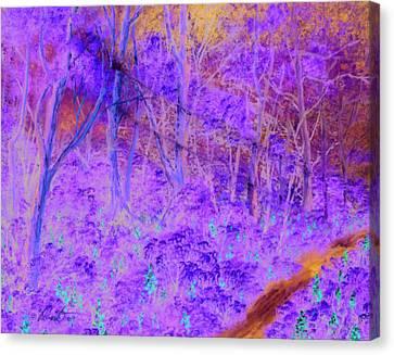 Woods By A Stream Canvas Print by Dennis Vebert