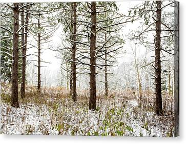Woods In Winter 2 At Retzer Nature Center  Canvas Print by Jennifer Rondinelli Reilly - Fine Art Photography