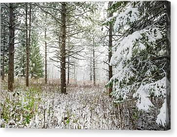 Woods In Winter At Retzer Nature Center  Canvas Print by Jennifer Rondinelli Reilly - Fine Art Photography