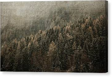 Woods In Winter Canvas Print by Vittorio Chiampan