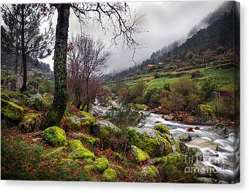 Rapids Canvas Print - Woods Landscape by Carlos Caetano