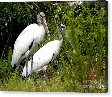 Canvas Print featuring the photograph Woodstork Couple by Terri Mills