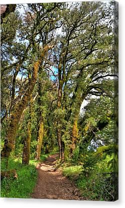 Woodsy Trail Canvas Print by Paul Owen