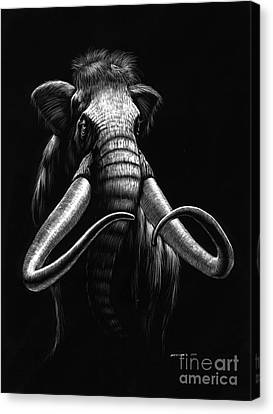 Woolly Mammoth Canvas Print by Stanley Morrison