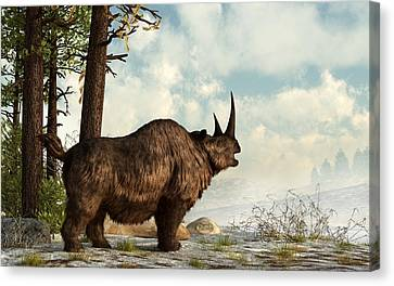 Woolly Rhino Canvas Print by Daniel Eskridge