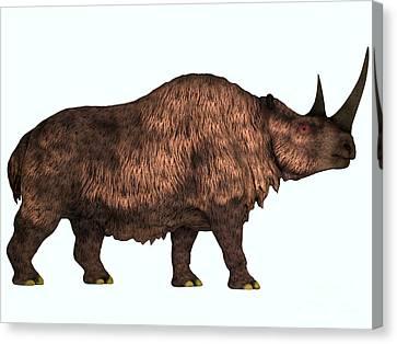 Woolly Rhino On White Canvas Print