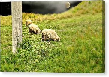 Wooly Canvas Print by Diana Angstadt