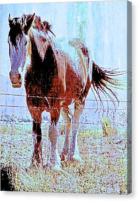 Workhorse Canvas Print by Cynthia Powell