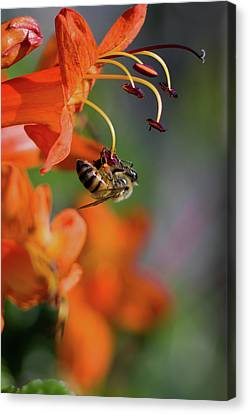 Working Bee Canvas Print by Stelios Kleanthous