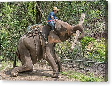Canvas Print featuring the photograph Working Elephant by Wade Aiken