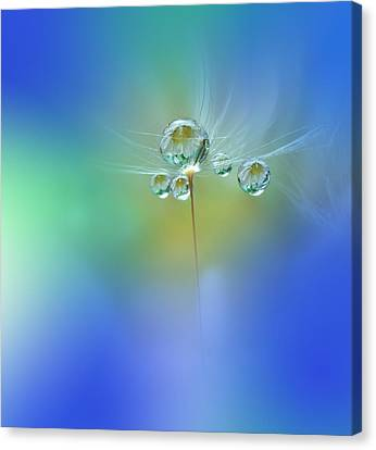 World Of Drops Canvas Print by Juliana Nan