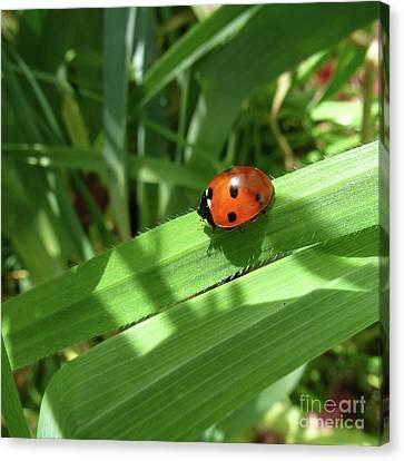 World Of Ladybug 1 Canvas Print by Jean Bernard Roussilhe