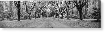 Canvas Print featuring the photograph Wormsloe Pathway by Jon Glaser