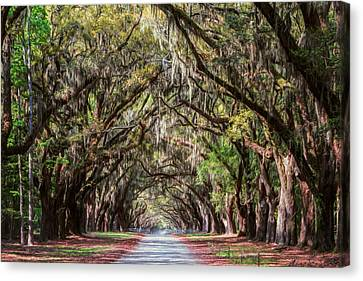Antebellum Canvas Print - Wormsloe Plantation Oaks by Joan Carroll