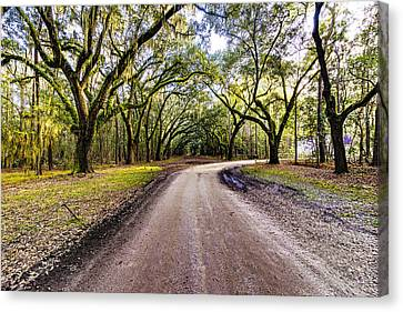 Canvas Print featuring the photograph Wormsloe Road by Anthony Baatz