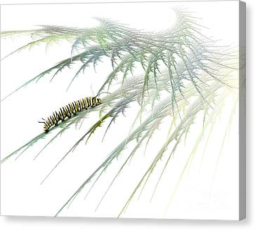 Insect Canvas Print - Wormwood by Jan Piller