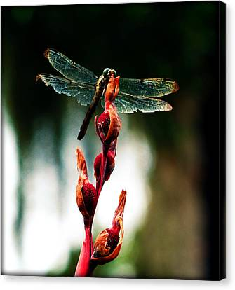 Wornout Dragonfly Canvas Print