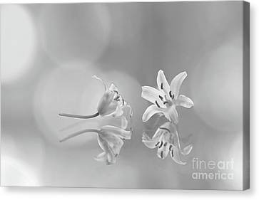 Would You Like To Dance? Canvas Print by Masako Metz