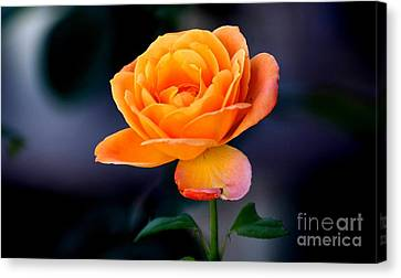 Canvas Print featuring the photograph Wow Rose by Michael Moriarty