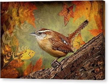 Wren Canvas Print - Wren In Autumn  by Bonnie Barry