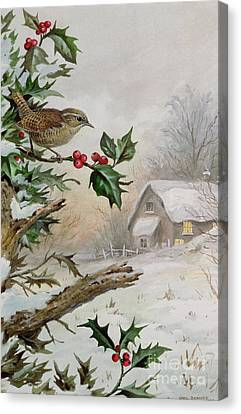 Wren In Hollybush By A Cottage Canvas Print by Carl Donner