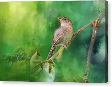 Wren In The Garden Bird Art Canvas Print