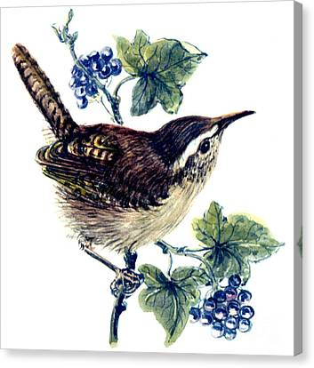 Wren In The Ivy Canvas Print by Nell Hill