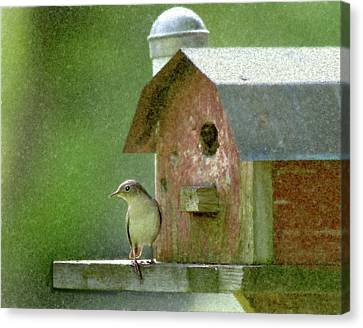 Wren Canvas Print by John Hix