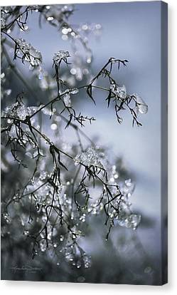 Written In Gypsophila Canvas Print by Karen Casey-Smith