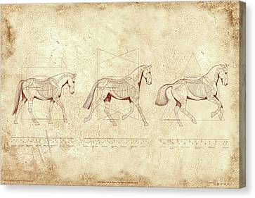 Wtc, Walk, Trot, Canter, The Horse's Gaits Revealed Canvas Print