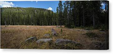 Wyoming Forest Clearing Canvas Print by Steve Gadomski