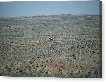 Wyoming Wild Horses In August Canvas Print by Thomas Woolworth