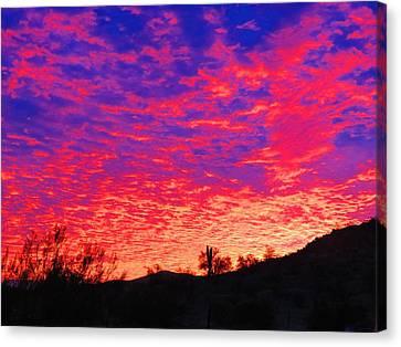Y Cactus Sunset 1 Canvas Print
