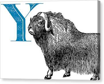 Y Yak Canvas Print by Thomas Paul