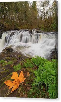 Canvas Print - Yacolt Creek Falls In Fall Season by David Gn