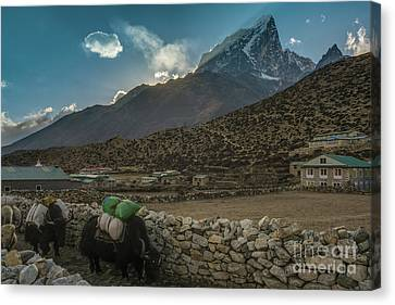 Canvas Print featuring the photograph Yaks Moving Through Dingboche by Mike Reid