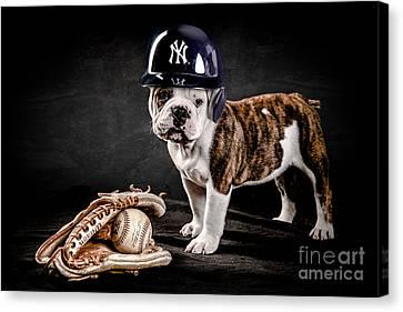 Yankee Bulldog Canvas Print by Jt PhotoDesign