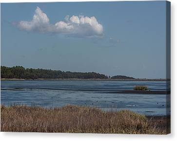 Yawkey Wildlife Reguge - View From The Causeway Canvas Print by Suzanne Gaff